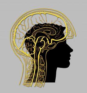 CPL Workshop Image: Your Brain on Politics